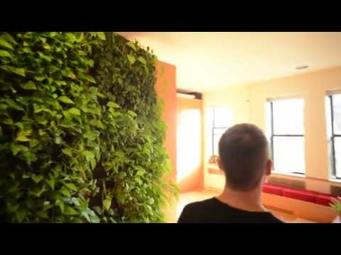 Green wall in middle of Manhattan apartment