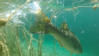 Travel Fishing the Clearest Lake in Florida?!?