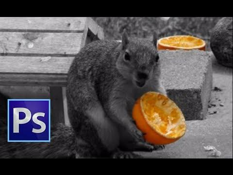 Adobe Photoshop CS6 - Color Splash Effect - [ Beginners ]