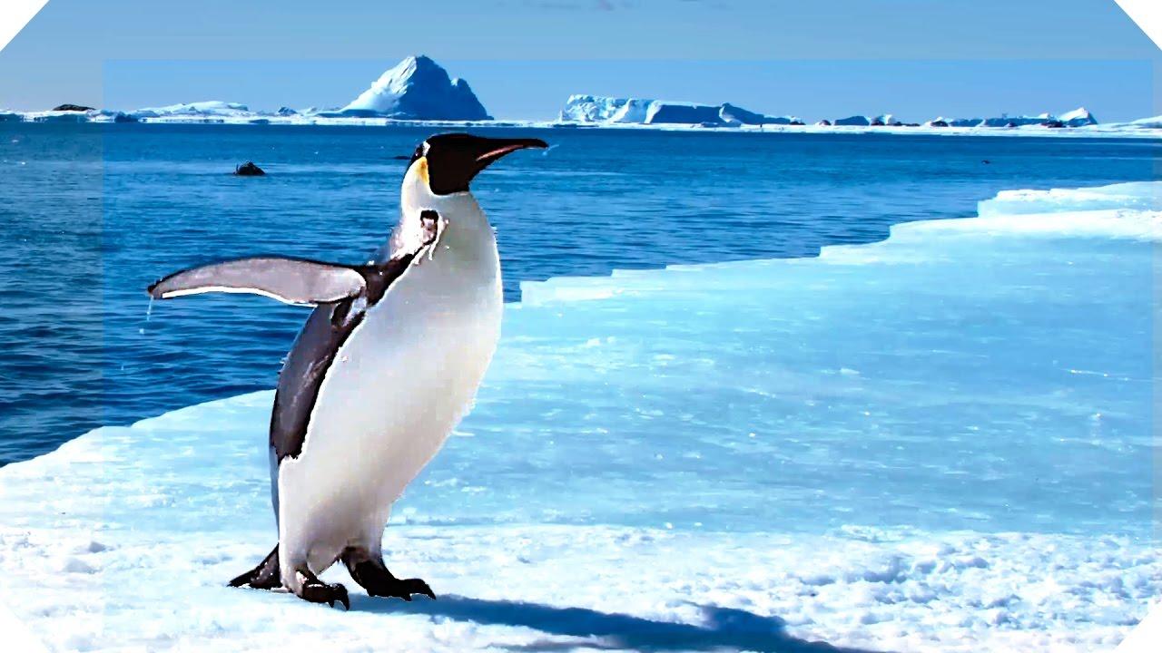 MARCHA DOS FILME A PINGUINS BAIXAR