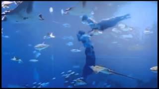Наутилус Помпилиус (Nautilus Pompilius) - Дыхание( Breath)