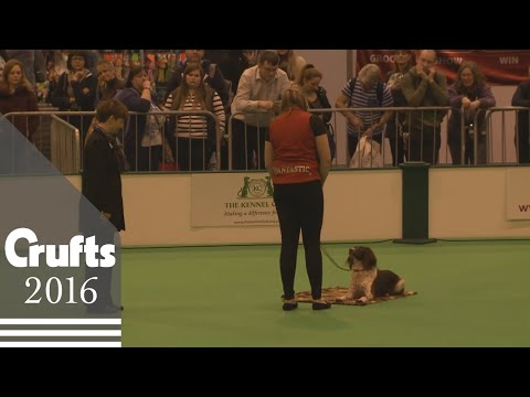 Obreedience Competition - Part 5 | Crufts 2016