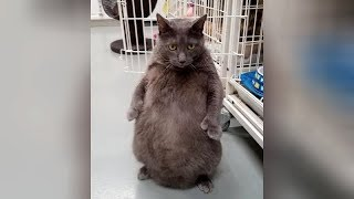SHOCKING UNBELIEVABLE but really FUNNY ANIMAL MOMENTS!