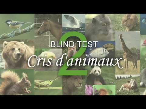 jeux quizz animaux