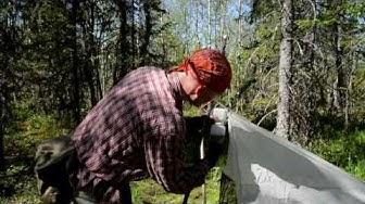 Rakkaudesta lajiin: Jukka Salmela suojelee sääskiä