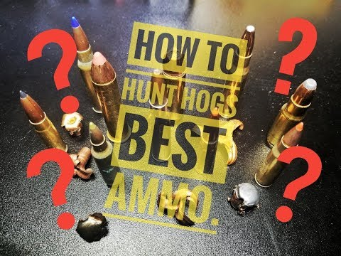 HOW TO HOG HUNT.   WHAT AMMO??