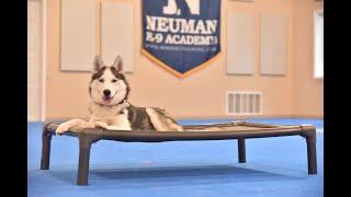 Zoya (Siberian Husky) Puppy Camp Dog Training Video Demonstration