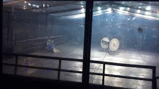 Extreme Robots Cheltenham 2018 Heavyweight Final: Gabriel Vs Aftershock