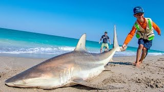 EPIC Day of Beach Fishing for Sharks and Pompano | Fan Episode - 4K