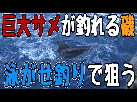 【人食い】巨大サメを泳がせ釣りで狙う【競争率激しいポイント クイシ】