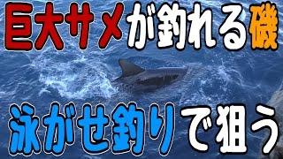 【人食い】巨大サメを泳がせ釣りで狙う【競争率激しいポイント クイシ】 thumbnail
