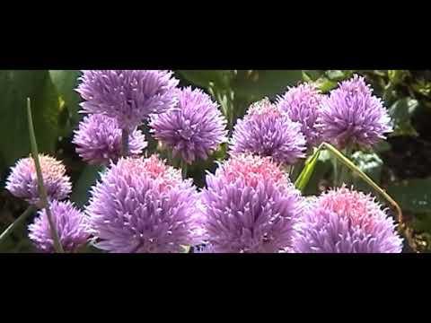 Viller the Garden,  an Introduction