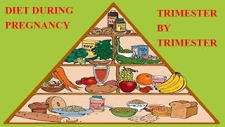 Diet During Pregnancy    trimester by trimester   in animation