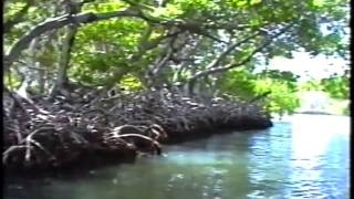 Mangrovenwald auf Isla Margarita/ Venezuela - Bootsfahrt -