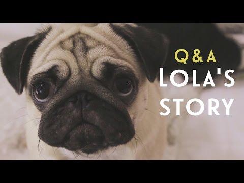 Вопрос-Ответ: История Лолы ( #BBВО) / Q&A Lolas story | Beauty Blanc