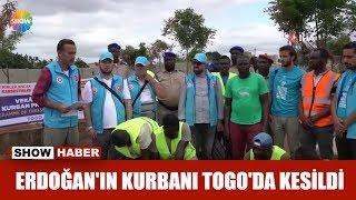 Erdoğan'ın kurbanı Togo'da kesildi