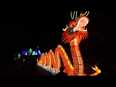 Zoominations A Chinese Lantern Festival Of Lights At