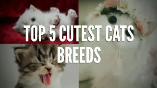 THE TOP 5 CUTEST CAT BREEDS  OF 2020 | MUST WATCH | THE TOP 5