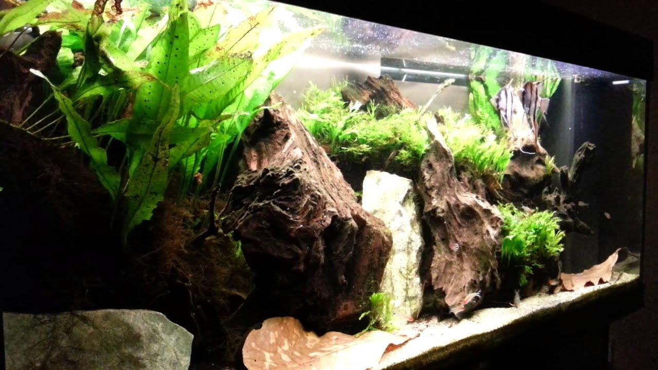 Apostolis 240lts amazon river biotope fish tank youtube for Amazon fish tanks