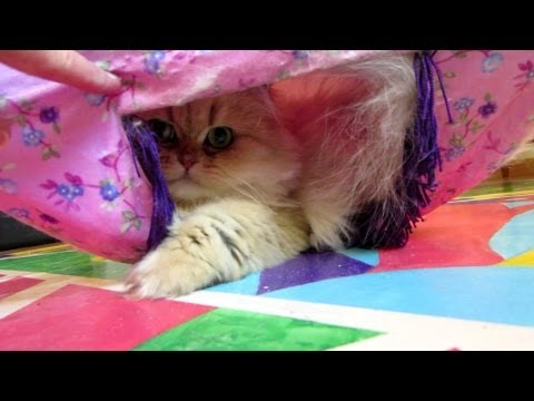 12 11 20 Tent games with Persian kitty, Sahara