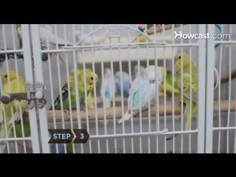 How To Choose A Birdcage
