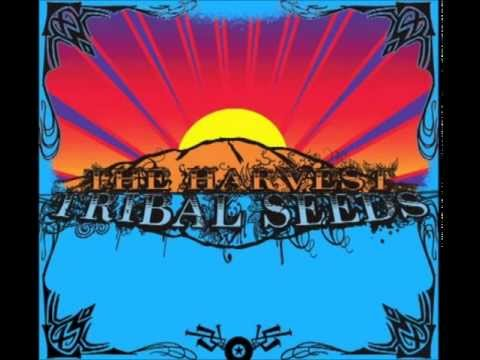 Tribal Seeds - Come Around