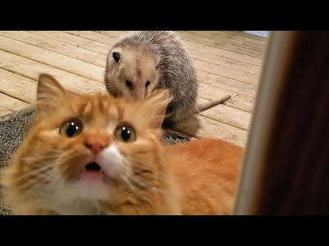I swear you have NEVER SEEN ANIMALS THAT FUNNY! - It's TIME TO LAUGH!