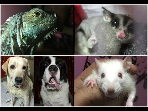 MY EVERYDAY MORNING ROUTINE | all of my pets | Wildly India