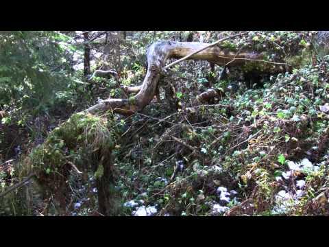 Hiking in Cheile Sugaului Reservation - Criminisu Peak