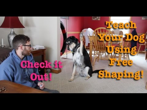 A fun way to train your dog! Free Shaping!