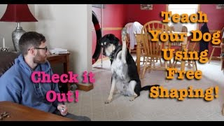 A Fun Way To Train Your Dog! Free Shaping!