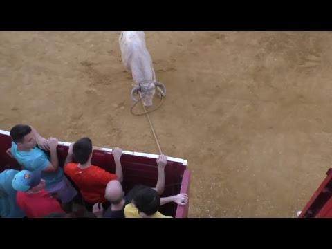Lodosa 2018 Domingo 23/9/18 Entrada Toro Ganadería Pincha y Suelta de Felino