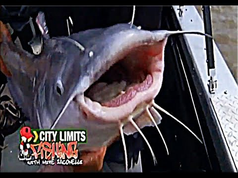 Mike Iaconelli's City Limits Fishing: St. Louis Catfish!!!