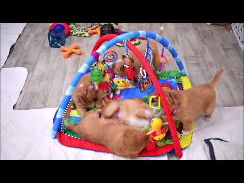 Patty's Puppies Present: The Pacifier