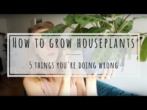 How to grow houseplants: 5 things you're doing wrong