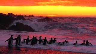 Antarctica Just Broke A Disturbing Record