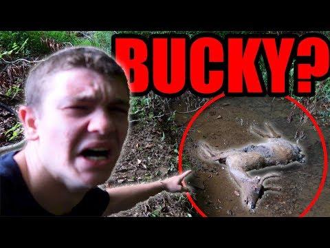 DID BLUE TONGUE KILL BUCKY???
