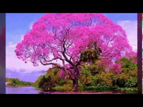 Beautiful Flowers Pink Slideshow Of Spring And Summer Flower Pictures With Music