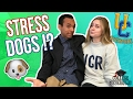 Stress Dogs?! - What To Expect At UCR!