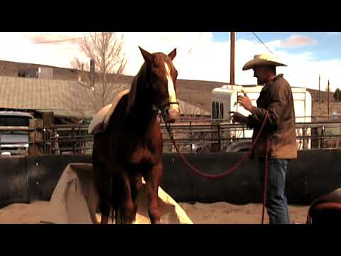 """First Saddle BLM Mustang """"Jesse"""" at Wild West Mustang Ranch"""