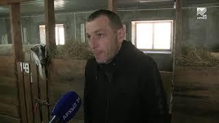 Санаторий для коз. Ферма в с. Джага поражает условиями содержания животных