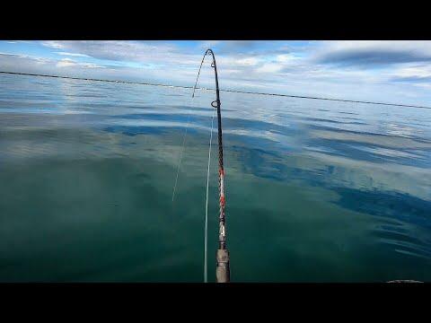 Like Fishing On A Sheet Of Glass (Octopus & Tautog Fishing)