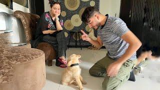 SHAHVEER TRAINING HIS DOG!