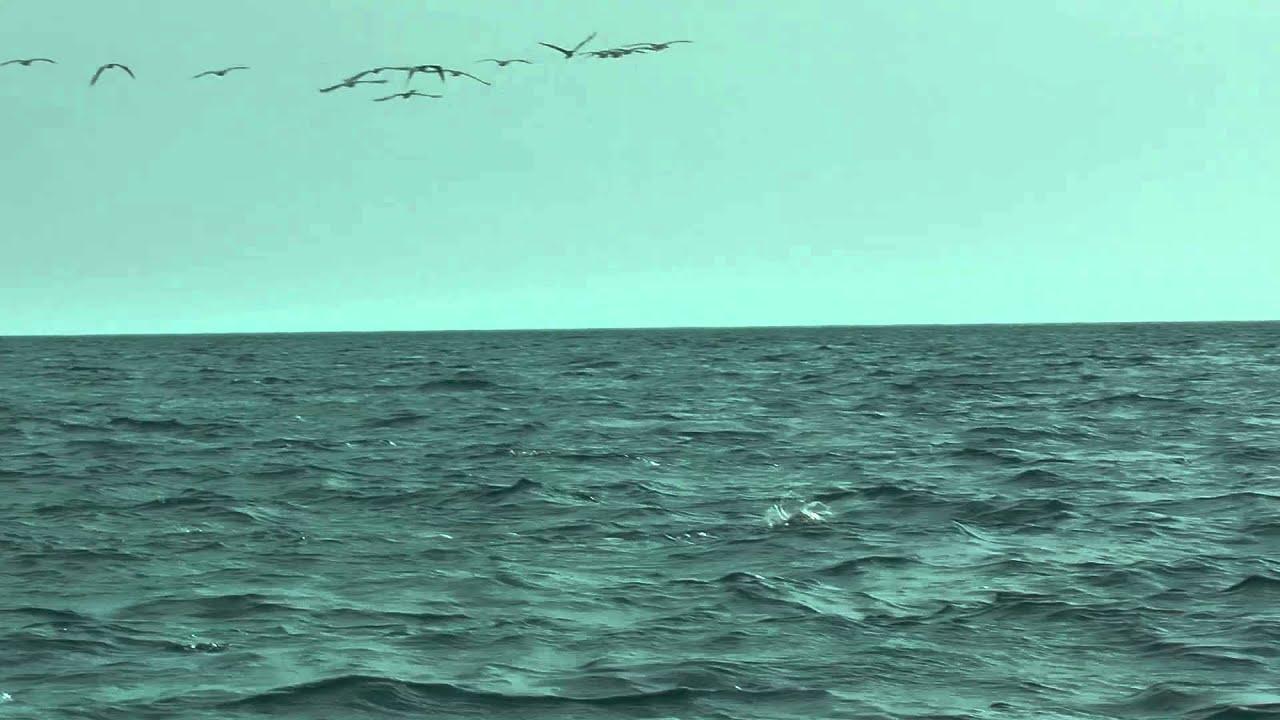 Gruppo di mante volanti