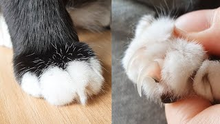 Cat's Paw and Claw (Close Up)