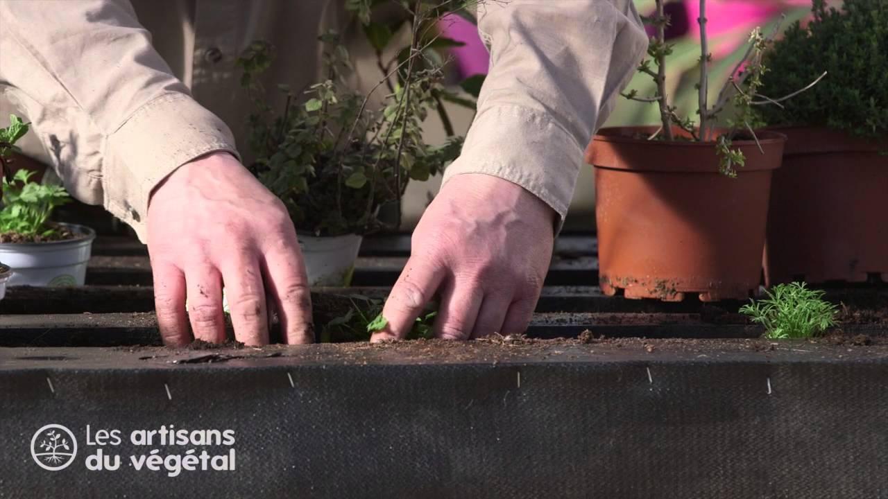 Comment planter ses aromatiques : thym, romarin, coriandre, laurier ...