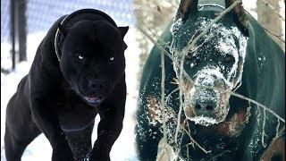 TOP 5 Razas De Perros con apariencia ATERRADORAS