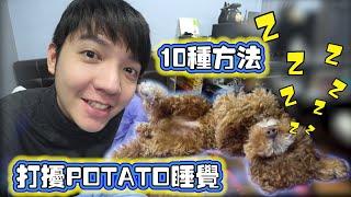 用10种方法吵醒我的狗狗POTATO!太好笑太可爱了 哈哈哈!