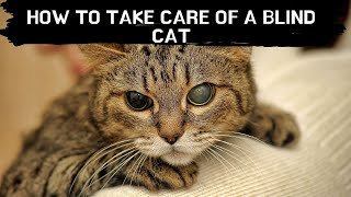 How to take care of a blind cat Updated 2021 || Blind cat care || Blind cat eyes