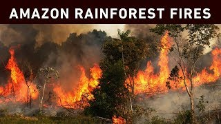 Record-breaking wildfires in the Amazon basin have destroyed vast amounts of the Amazon rainforest, creating a real threat to the fight against climate change.